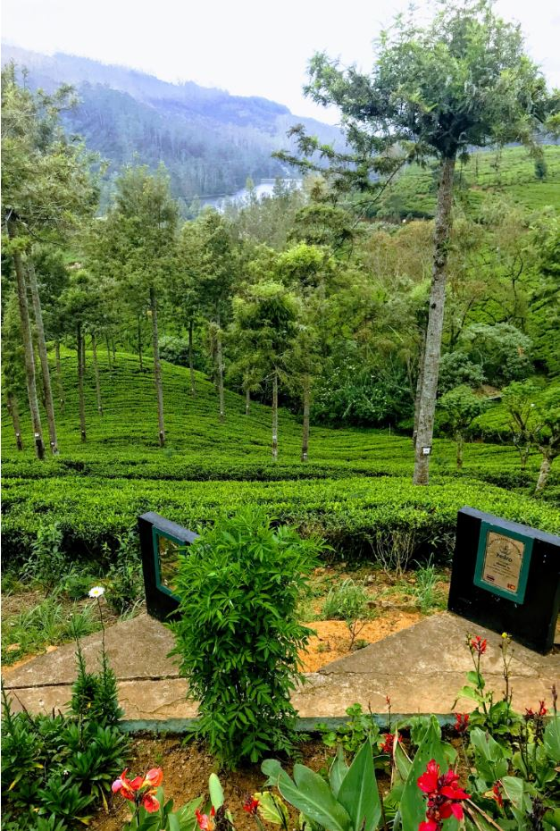 Pedro Tea Estate, Nuwara Eliya