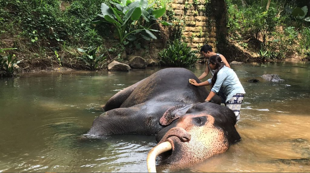 Scrubbing elephants at Pinnawala Elephant Orphanage