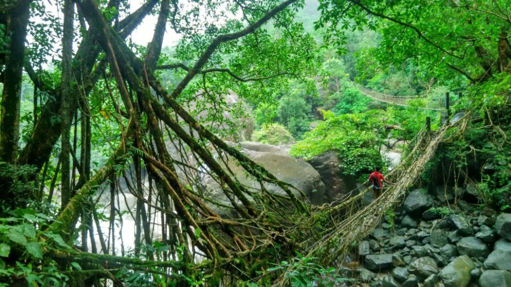 Root bridges in Cherrapunji, Meghalaya