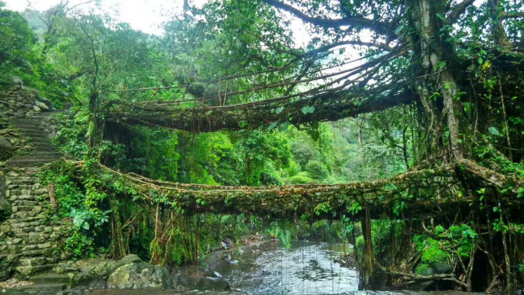 Double decker root bridge, Cherrapunji, Meghalaya