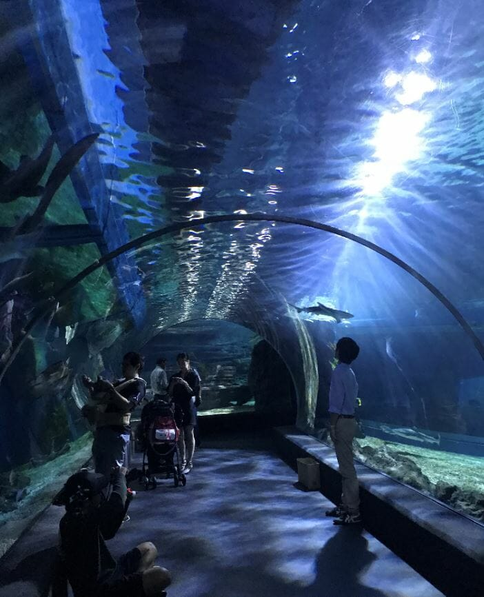 Aquarium walk through tunnel with sharks and sting ray in Ocean World