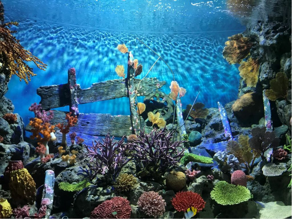 Giant aquarium with coral reefs in Sea life