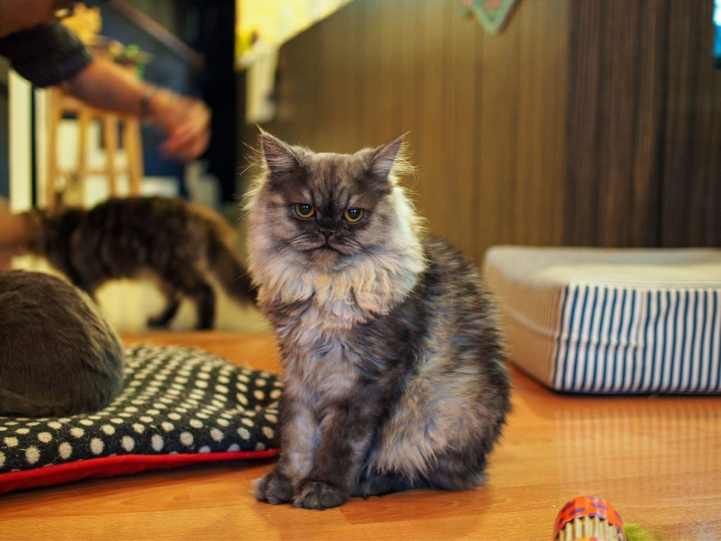 Cat Cafe in Bangkok