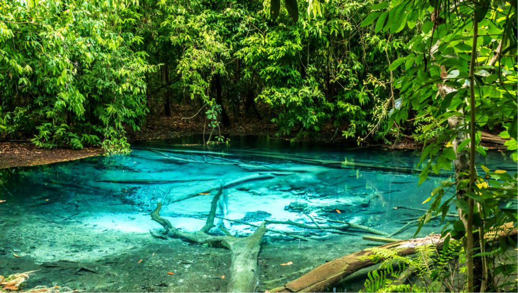 Emerald Pool Hot Springs in Krabi