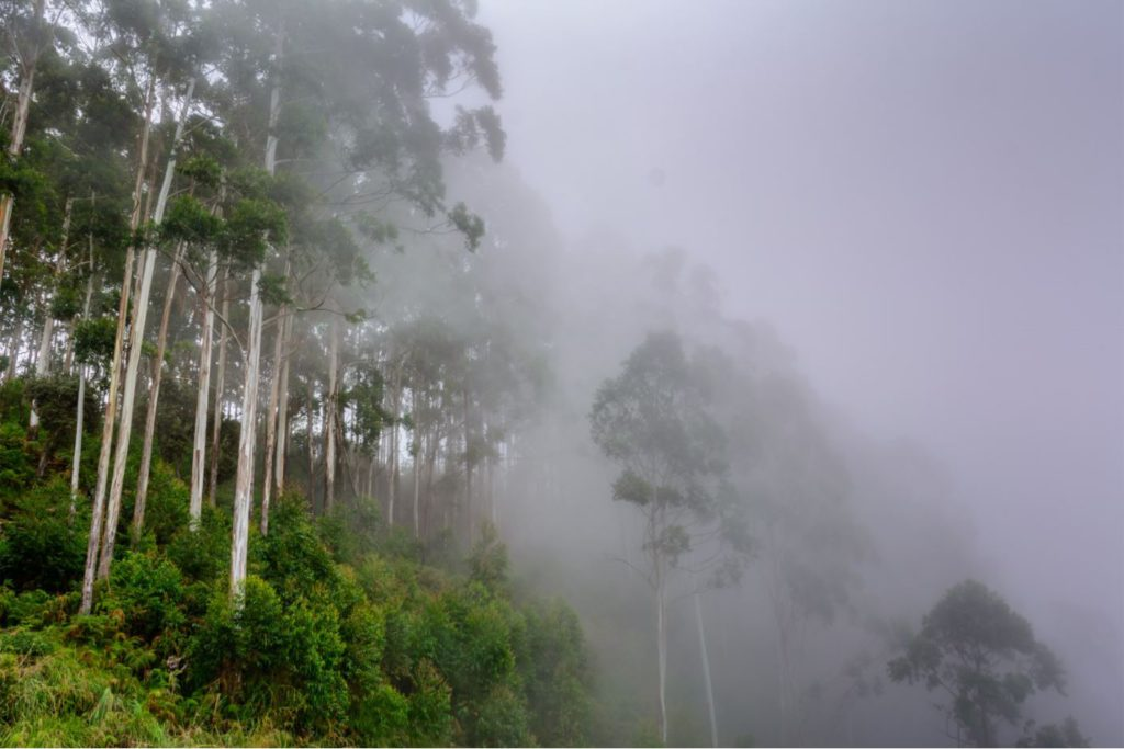 Forest covered in mist in Kodaikanal