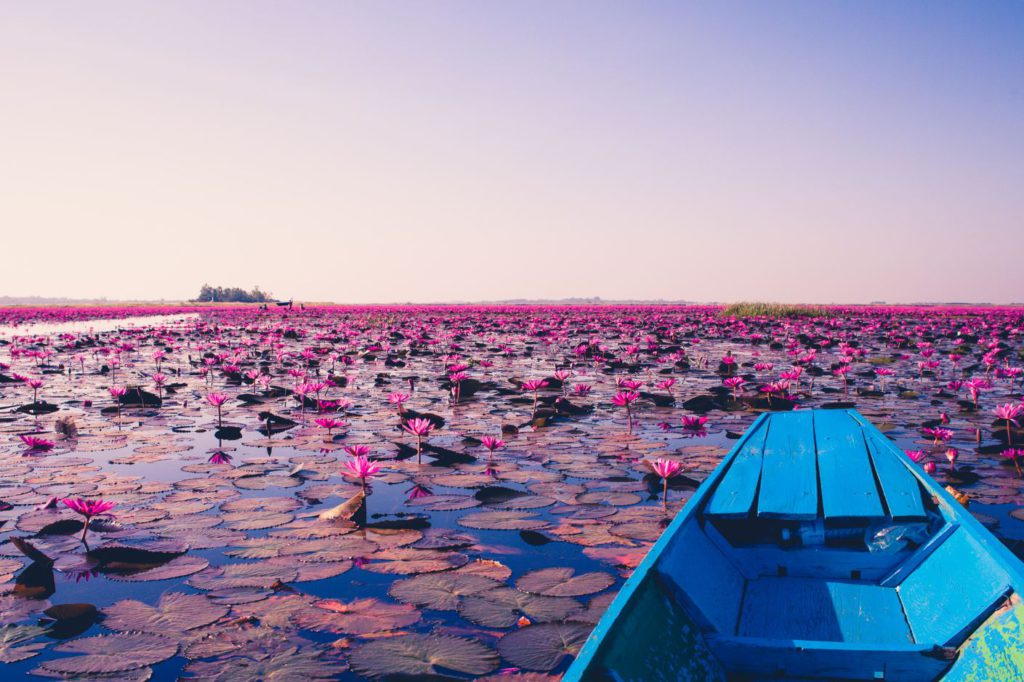 Red Lotus Lake in Udon Thani