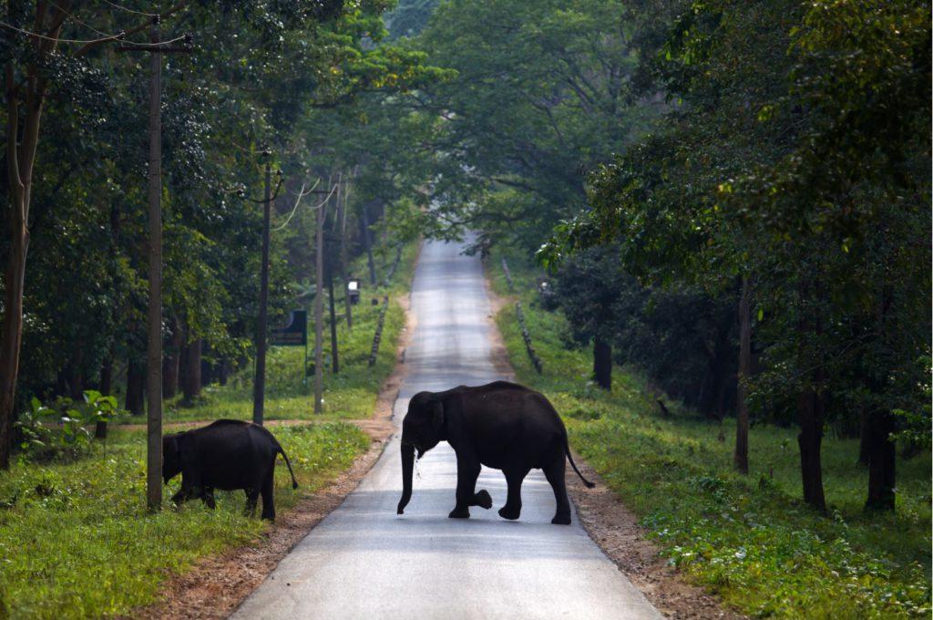 Elephants crossing road in Nagarhole National Park