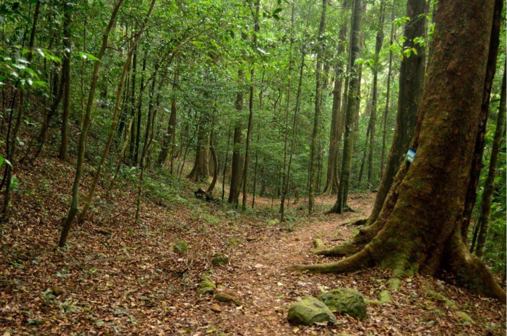 Trekking inside Pushpagiri Forests