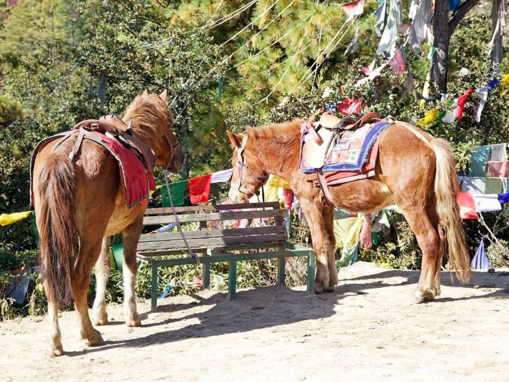 Horses available for the hike