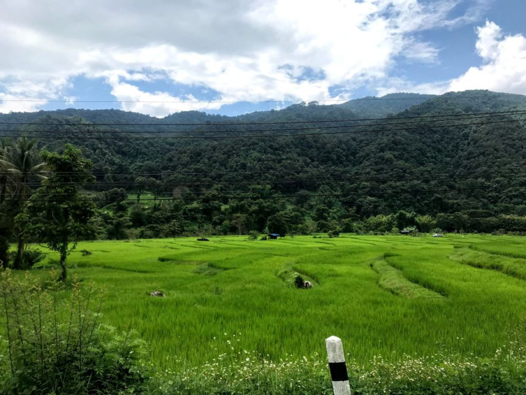 Paddy fields around Nan with hills in the background