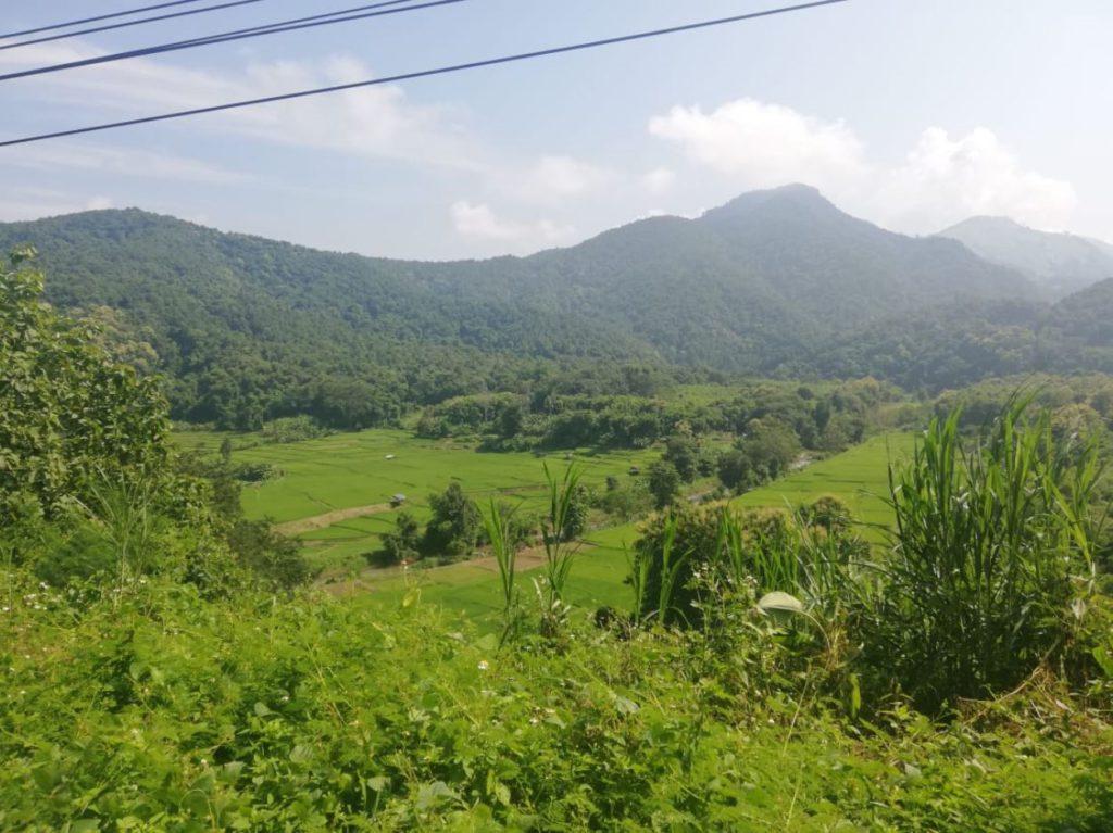 Paddy fields in Pua