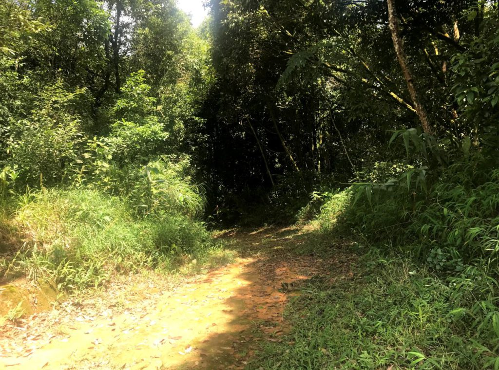 Phukha Nature Trail starting from the camping grounds