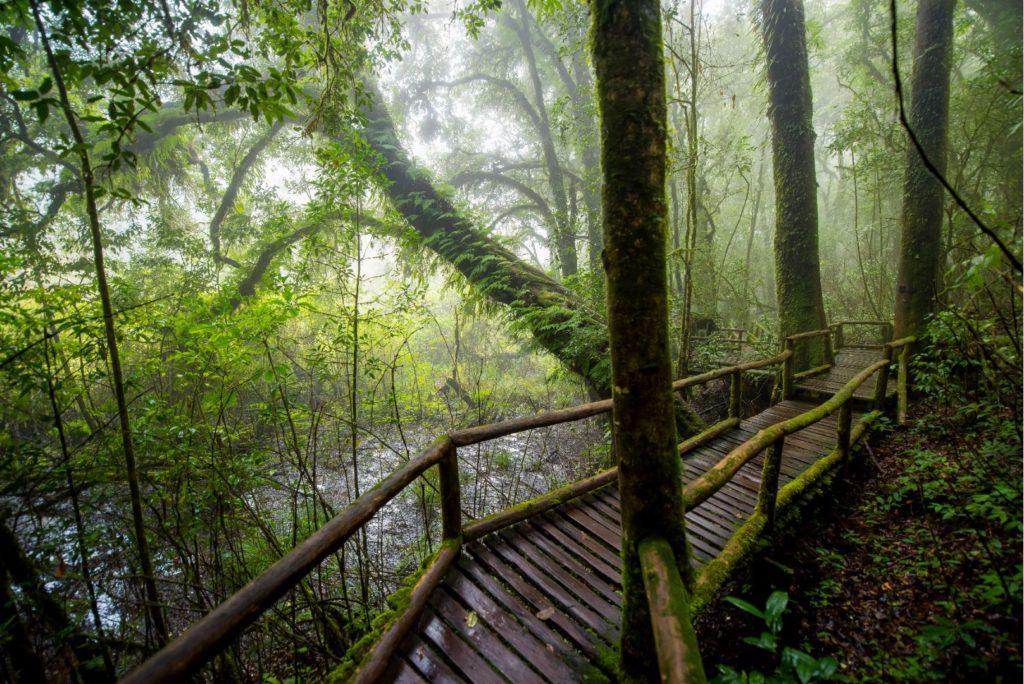 Ang Ka nature trail in Doi Inthanon National Park