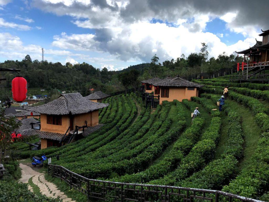 Tea gardens at Lee Wine Resort