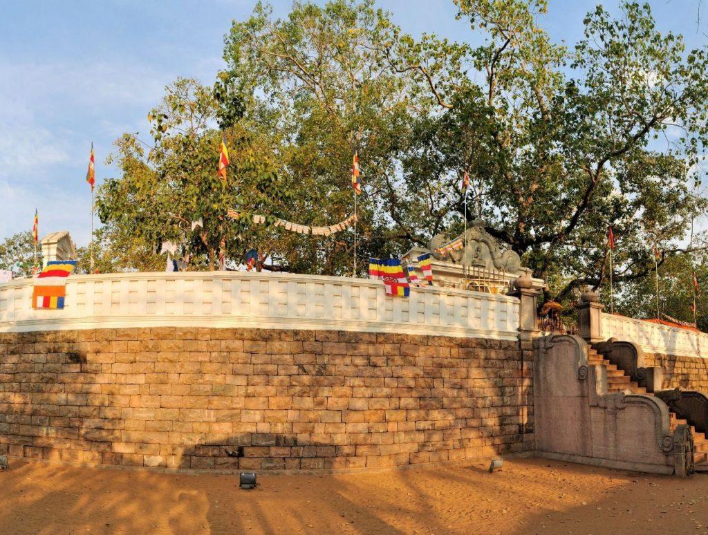 Maha Bodhi Tree, Anuradhapura