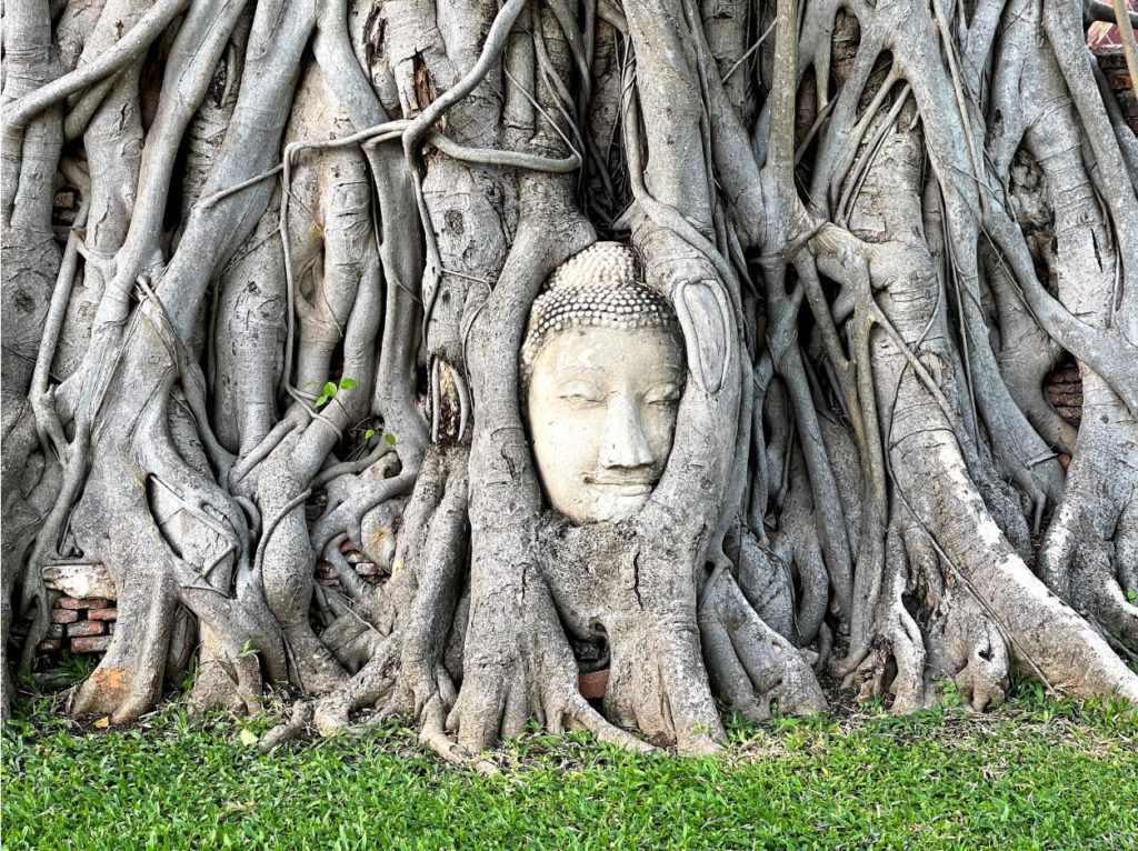 A stone sculpture of Buddha's face entwined with tree trunks, Ayutthaya
