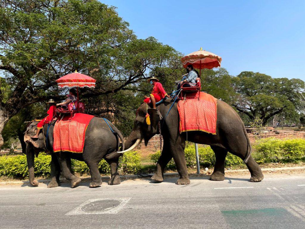 Elephant ride in Ayutthaya